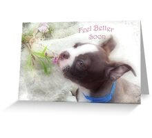 Feel Better Soon ~ Boston Terrier Greeting Card Greeting Card