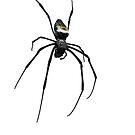 Incy Wincy Spider by Barnbk02