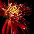 Dahlia Show and Tell by Jessica Jenney