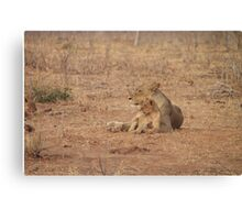 Lioness and Lion Cub Snuggle Together Canvas Print