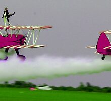 Purple Wing Walkers by ncp-photography
