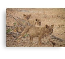 Three Wild African Lion Cubs Canvas Print