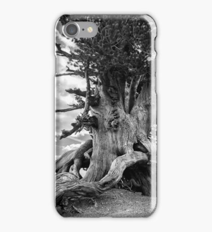 1500 Year Old Tree iPhone Case/Skin