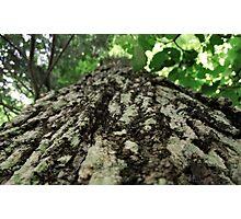 Up the tree Photographic Print
