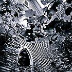 Through The Trees by Paul Lubaczewski