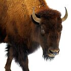 Buffalo Stance by vette