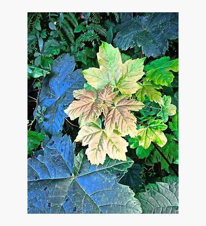 Multi-coloured leaves Photographic Print