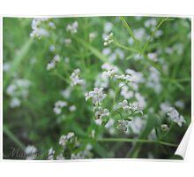 White Flower Macro Poster