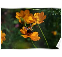 Bumble Bee Melody Poster