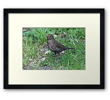 bird on the meadow Framed Print