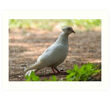 pigeons in the park Art Print