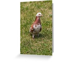 pigeons in the park Greeting Card