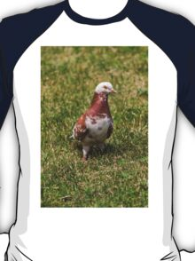 pigeons in the park T-Shirt