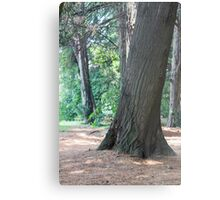 tree in the forest Metal Print