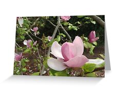 Magnolia Greeting Card