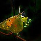 Fractal Butterfly Of Kolkhoz by Atılım GÜLŞEN