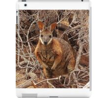Tammar Wallaby iPad Case/Skin
