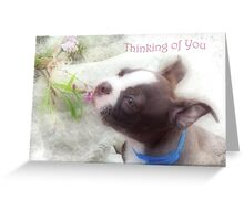Thinking of You ~ Boston Terrier Greeting Card Greeting Card