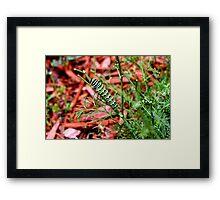 Colorful Caterpillar  Framed Print