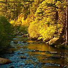 Fall along the Carson River by Barbara  Brown