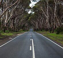 Covered Road by Paul Barnett