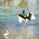 Jabiru Hunting by Julia Harwood