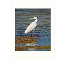 WADER ~ Great Egret by tasmanianartist Art Print
