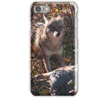Prairie wolf  iPhone Case/Skin