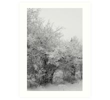 Frost Coated Trees Art Print