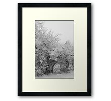 Frost Coated Trees Framed Print