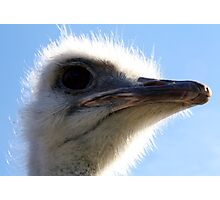 The Ostrich That Bit My Lens Photographic Print