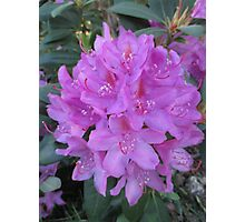Rhododendron Bouquet Photographic Print