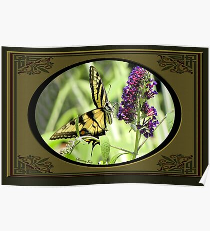 Swallowtail Butterfly Having Lunch Poster