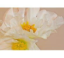 White Begonia Ruffles  Photographic Print