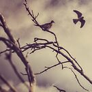 Kestrel and Dove by Mark Wade