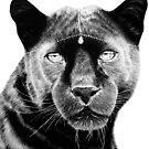 Black Jaguar White Jewellery by Jeanette  Treacy