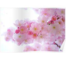 Japanese Cherry Trees Poster