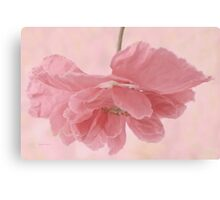 Pretty Pink Poppy Macro Canvas Print