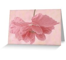 Pretty Pink Poppy Macro Greeting Card