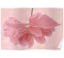Pretty Pink Poppy Macro Poster