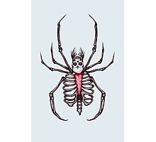 Black Widow Spider Skeleton Photographic Print