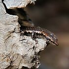 Peek a Boo Lizard by Penny Smith