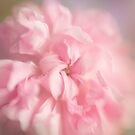 Soft Pink Rose by Ellesscee