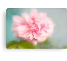 Delicate Pink Rose Canvas Print