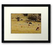Lounging cows Framed Print