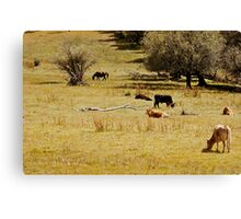 Lounging cows Canvas Print
