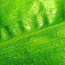 Wet Leaf by Barnbk02