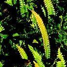 Small Ferns by Barnbk02