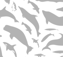 Dolphin a background Sticker