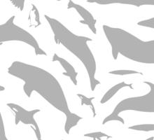 Dolphin a background Sticker